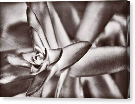 Sensual Succulent II Canvas Print