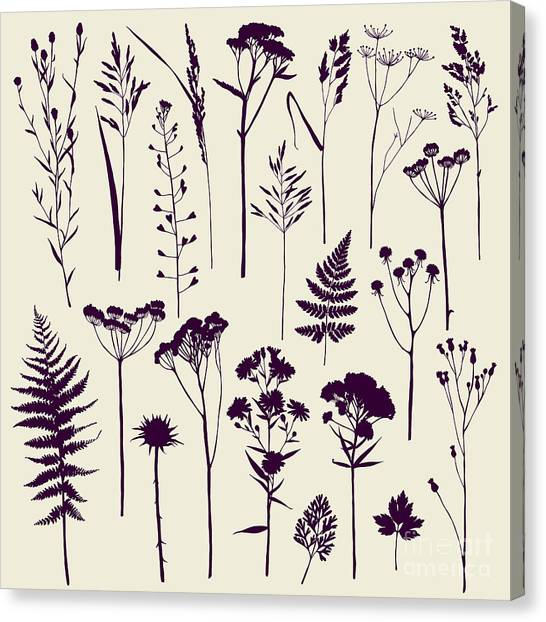 Ok Canvas Print - Set Of Illustrations Of Plants by Xenia ok