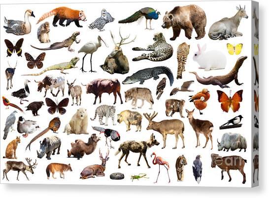Zoology Canvas Print - Set Of Various Asian Isolated Wild by Iakov Filimonov