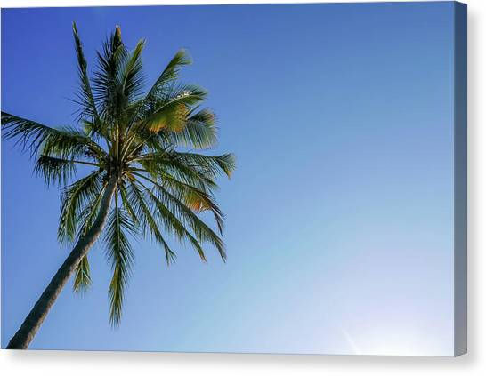 Shades Of Blue And A Palm Tree Canvas Print