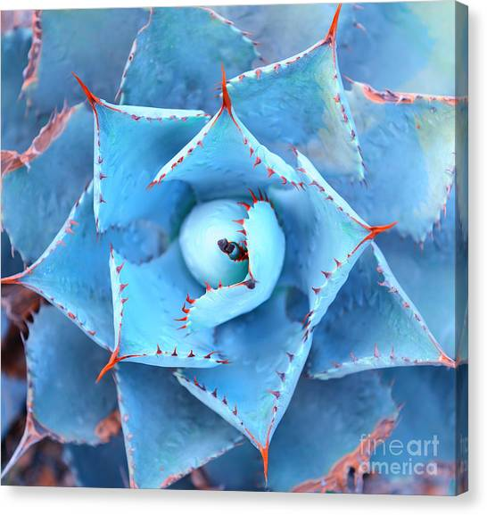 Sharp Pointed Agave Plant Leaves Canvas Print by Asharkyu