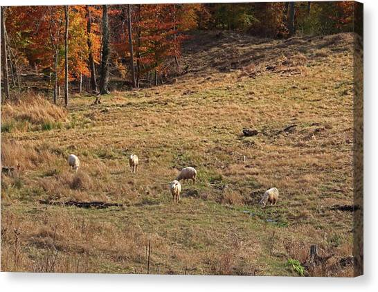 Canvas Print featuring the photograph Sheep In A Field by Angela Murdock