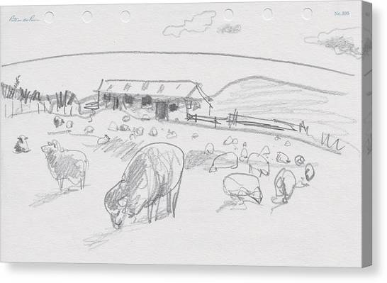 Sheep On Chatham Island, New Zealand Canvas Print