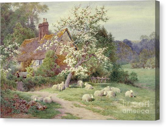 Ewe Canvas Print - Sheep Outside A Cottage In Springtime by Charles James Adams