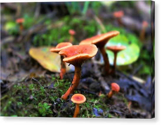 Canvas Print featuring the photograph Shrooms by Candice Trimble
