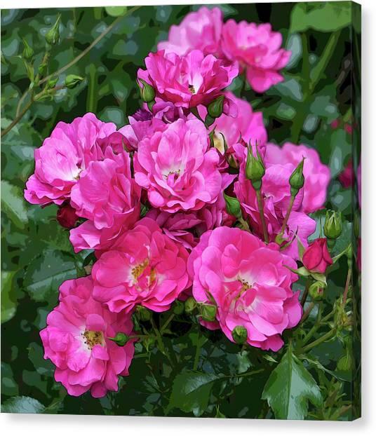 Shrub Rose Stylized Canvas Print