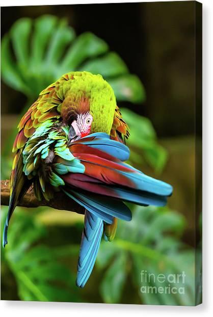 Shy Parrot Canvas Print