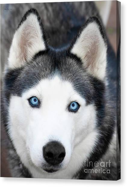 Canvas Print featuring the painting Siberian Husky Mask A91818 by Mas Art Studio