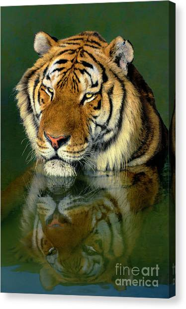 Siberian Tiger Reflection Wildlife Rescue Canvas Print