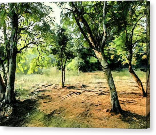 Silence Of Forest Canvas Print