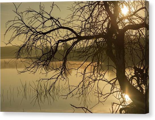 Silhouette Of A Tree By The River At Sunrise Canvas Print