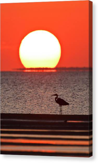 Low Tide Canvas Print - Silhouette Of Great Blue Heron Ardea by Danita Delimont