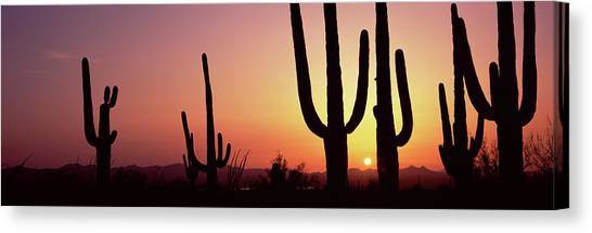 Canvas Print - Silhouette Of Saguaro Cacti Carnegiea by Panoramic Images