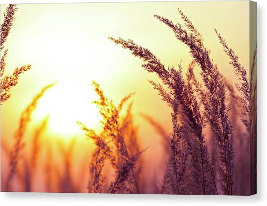 Blade Of Grass Canvas Print - Silhouette Of Wildflowers During Sunset by Bgfoto