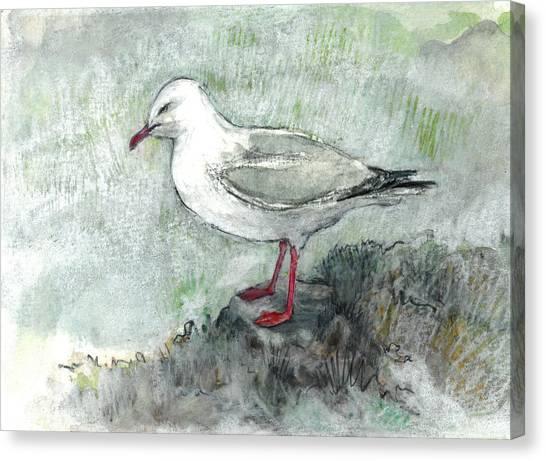 Silver Gull Canvas Print