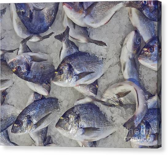 Fish Market Canvas Print - Silver Sea Bream For Sale At The by Dimitrios