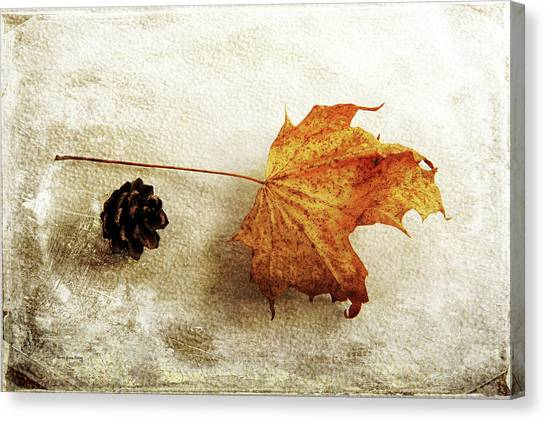 Canvas Print featuring the photograph Simple And Beautiful by Randi Grace Nilsberg