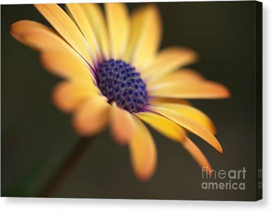 Simply Beautiful In Yellow To Orange  Canvas Print