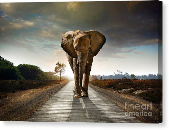 Powerful Canvas Print - Single Elephant Walking In A Road With by Carlos Caetano