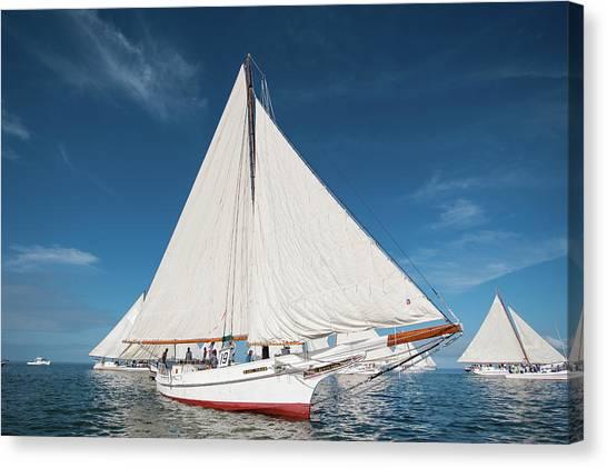 Skipjack Rosie Parks Canvas Print