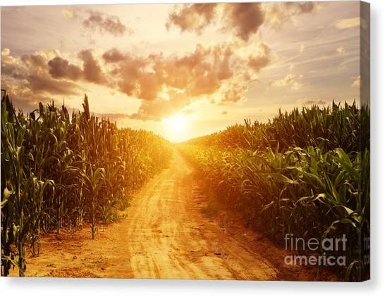 Corn Canvas Print - Skyline And Corn Field by Zhu Difeng