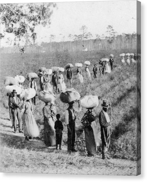 Slaves In The Cotton Fields Canvas Print by Fotosearch