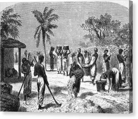 Slaves On The Plantation Canvas Print by Hulton Archive
