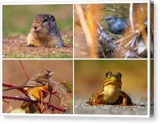Small Animal Collage Canvas Print