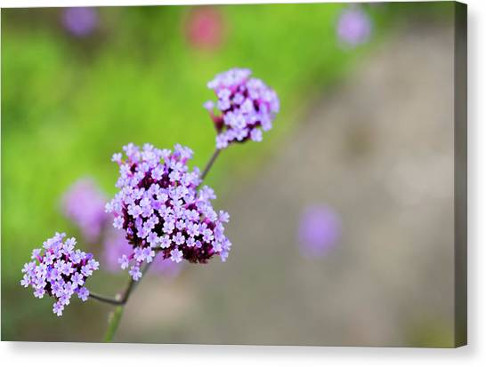 Canvas Print featuring the photograph Small Purple Flowers by Scott Lyons