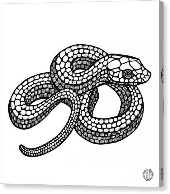 Smooth Green Snake Canvas Print