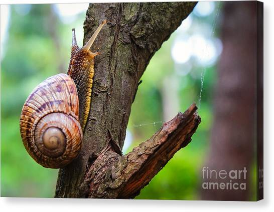 Protein Canvas Print - Snail On The Tree In The Garden. Snail by Bozhena Melnyk