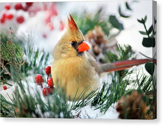 Canvas Print featuring the photograph Snow Cardinal by Christina Rollo