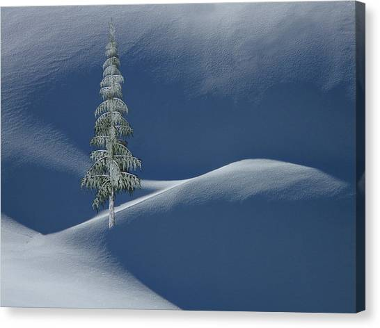 Snow Covered Tree And Mountains Color Canvas Print