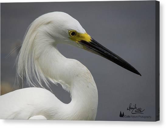 Snow Egret Portrait Canvas Print
