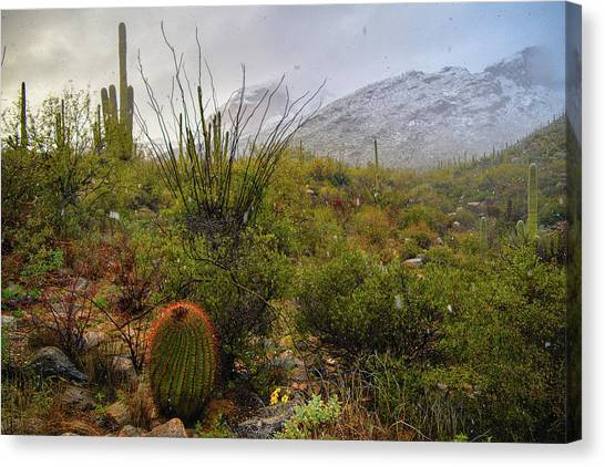 Snow In The Desert Canvas Print