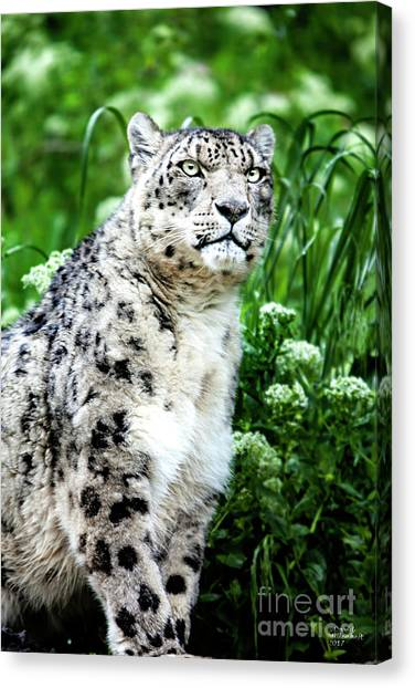 Snow Leopard, Leopard Art, Animal Decor, Nursery Decor, Game Room Decor,  Canvas Print