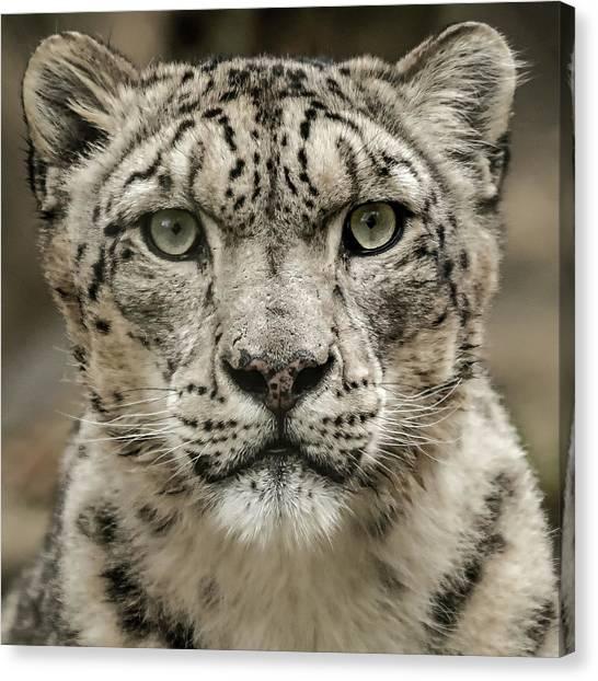Snowleopardfacial Canvas Print