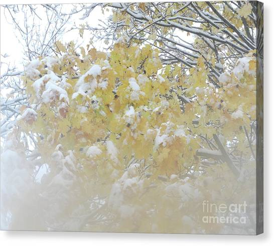 Canvas Print featuring the photograph Snowy Maple by PJ Boylan