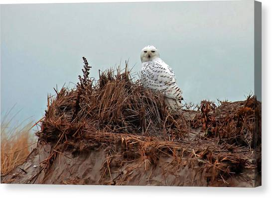 Snowy Owl In The Dunes Canvas Print