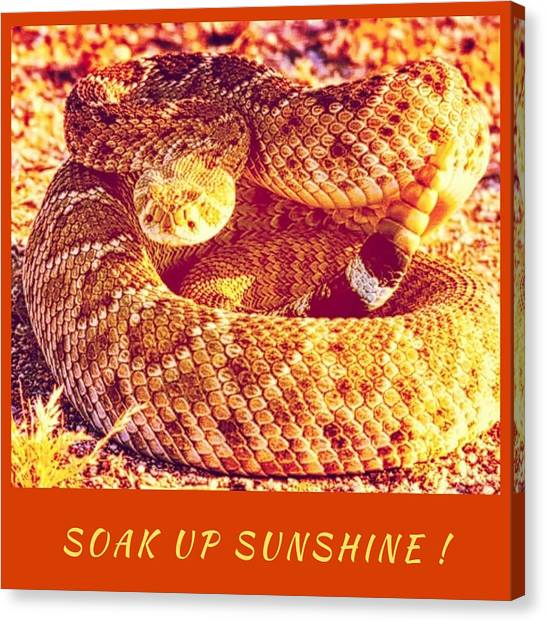 Soak Up Sunshine Canvas Print