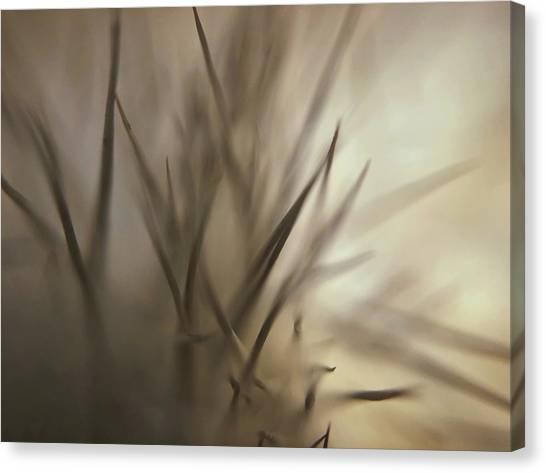 Soft And Spiky Canvas Print