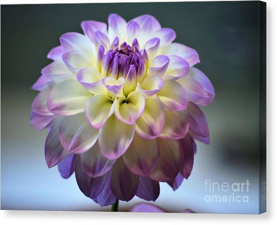 Canvas Print featuring the photograph Soft Focus Dahlia by Patti Whitten