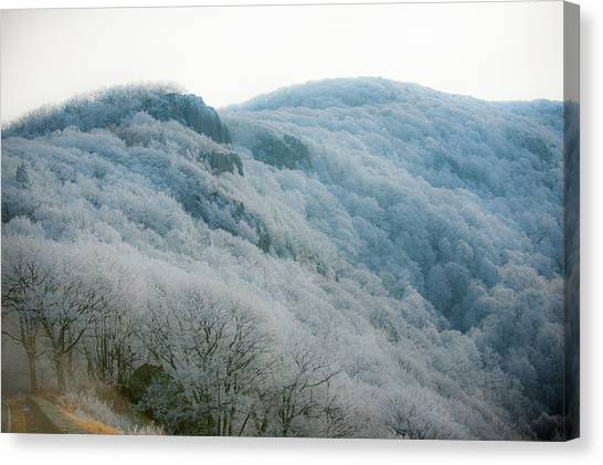Soft Hoarfrost Canvas Print