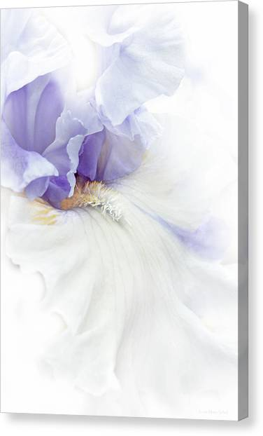 Softness Of A Lavender Iris Flower Canvas Print