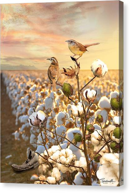Song Of The Wren Canvas Print