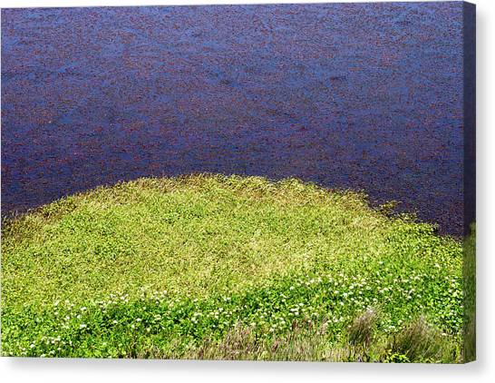 Sonoma Coast Al_697_18 Canvas Print