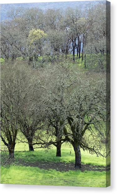 Sonoma Valley Rp_1439_18 Canvas Print