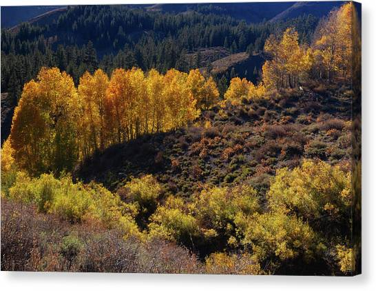 Canvas Print featuring the photograph Sonora Pass by Tassanee Angiolillo