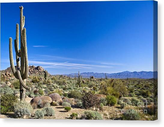 Shrub Canvas Print - Sonoran Desert Landscape In Scottsdale by Tom Roche