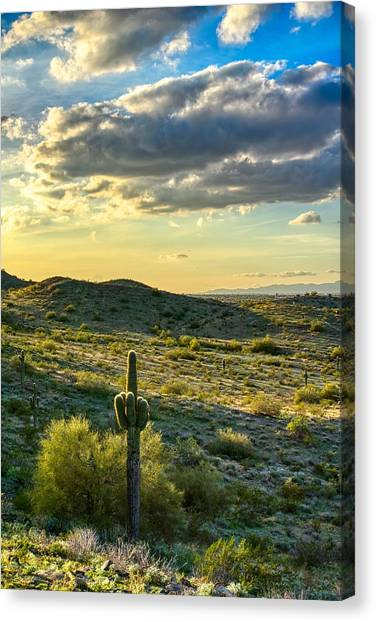Sonoran Desert Portrait Canvas Print